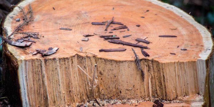 morinocoナイフ 中濃森林組合 枝葉活用